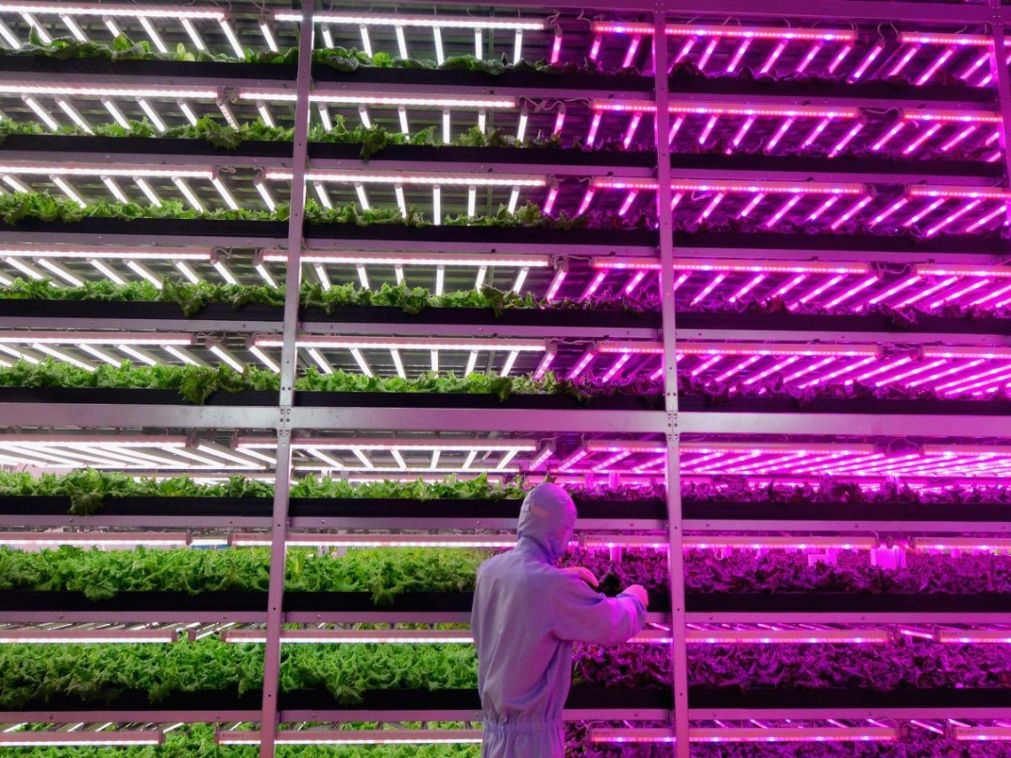 從航太、科技到金融巨擘  為何都在瘋植物工廠?