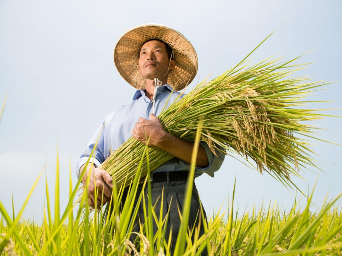 菜鳥農夫 種出國際大賞米