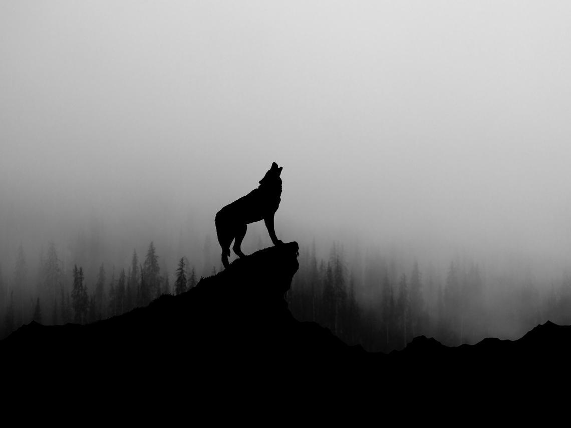 拚專業、練膽識、勤思考 三生存法則喚醒狼性