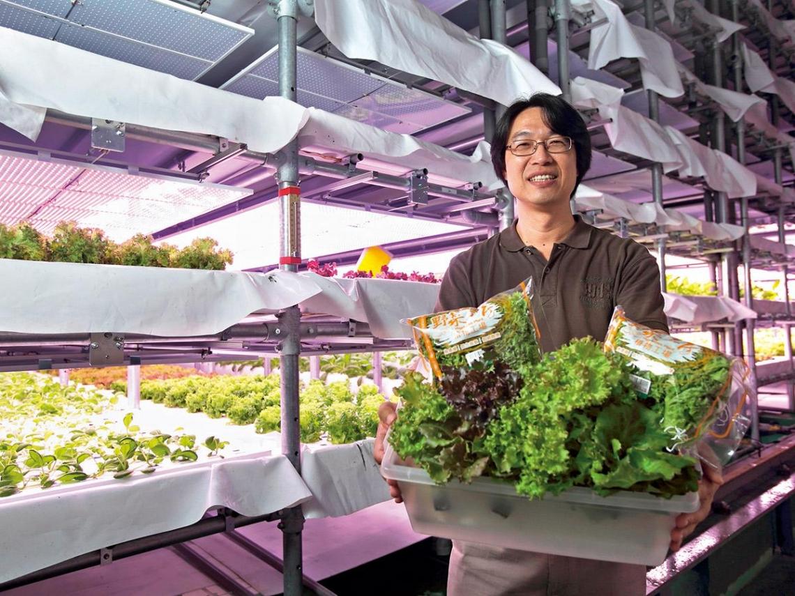 野菜工房 打造全球最大有機蔬菜廠