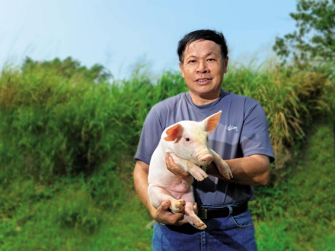 縣市名產巡禮》台中.高登畜牧場  神農獎獸醫獨家飼育法  撫育健康海藻豬