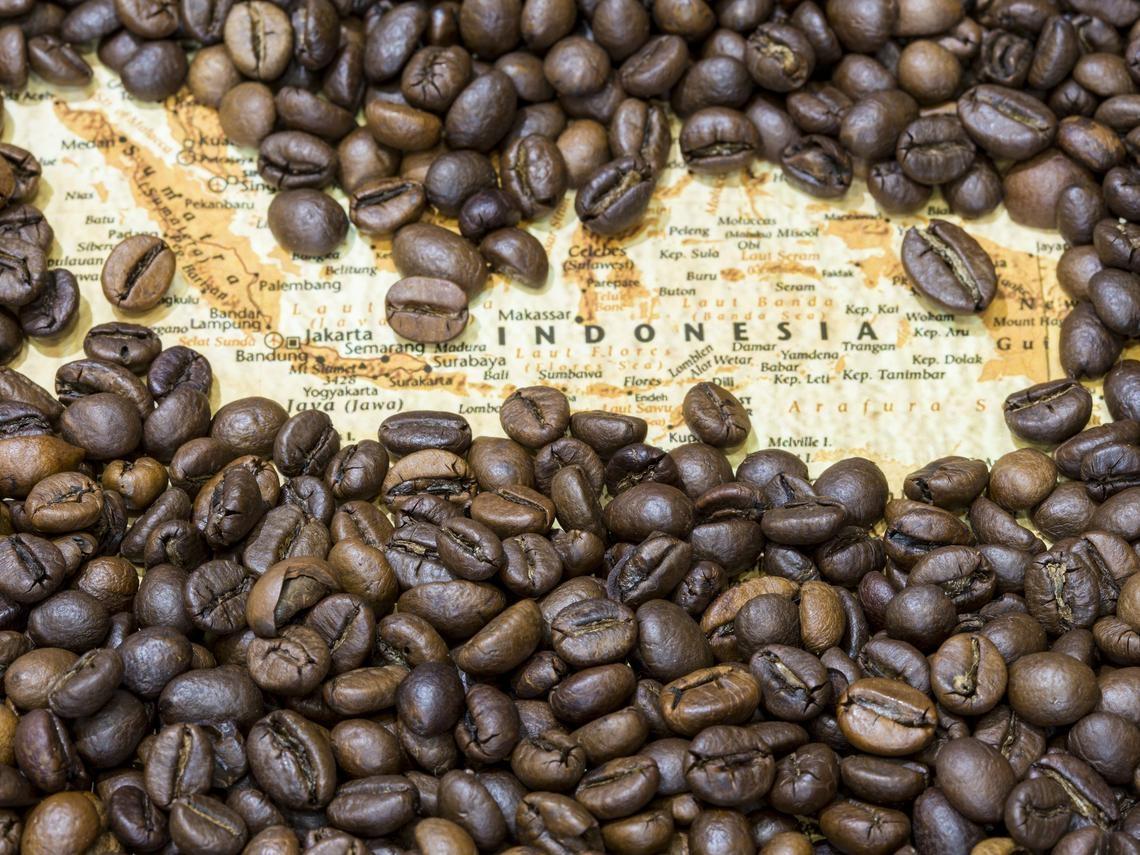 從三噸咖啡豆開始   捍衛雨林生態