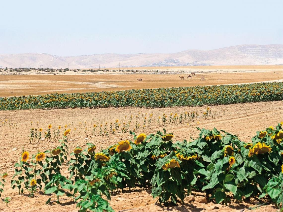 以色列   荒漠奇蹟