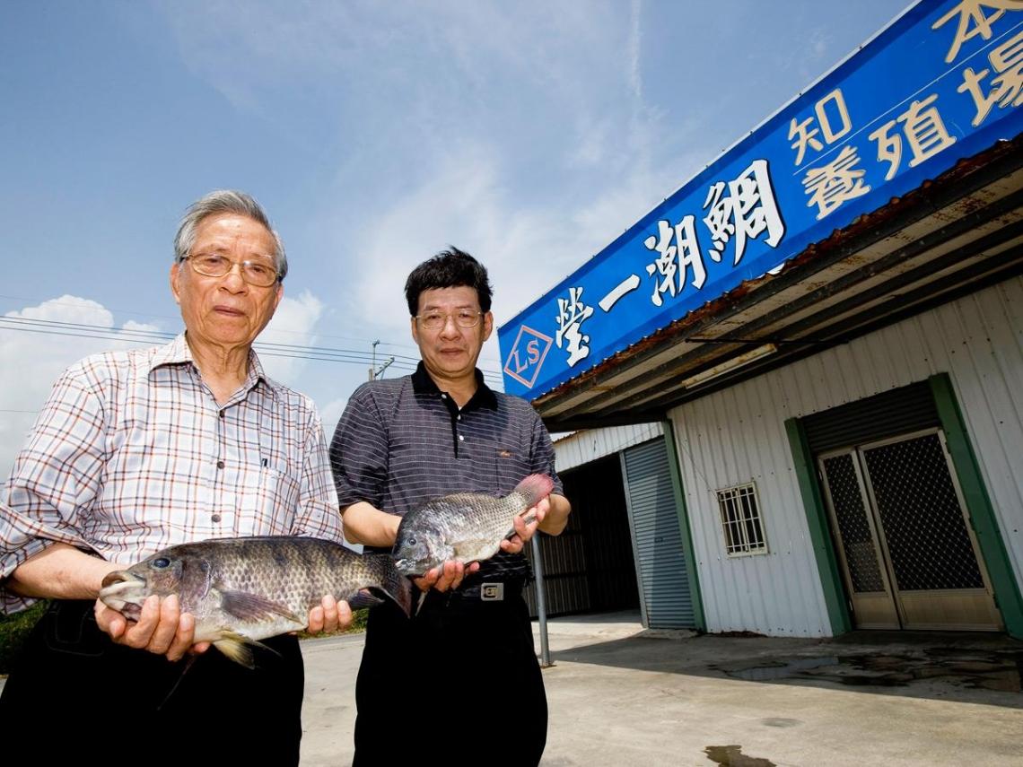 爛泥裡的吳郭魚變身五星級生魚片