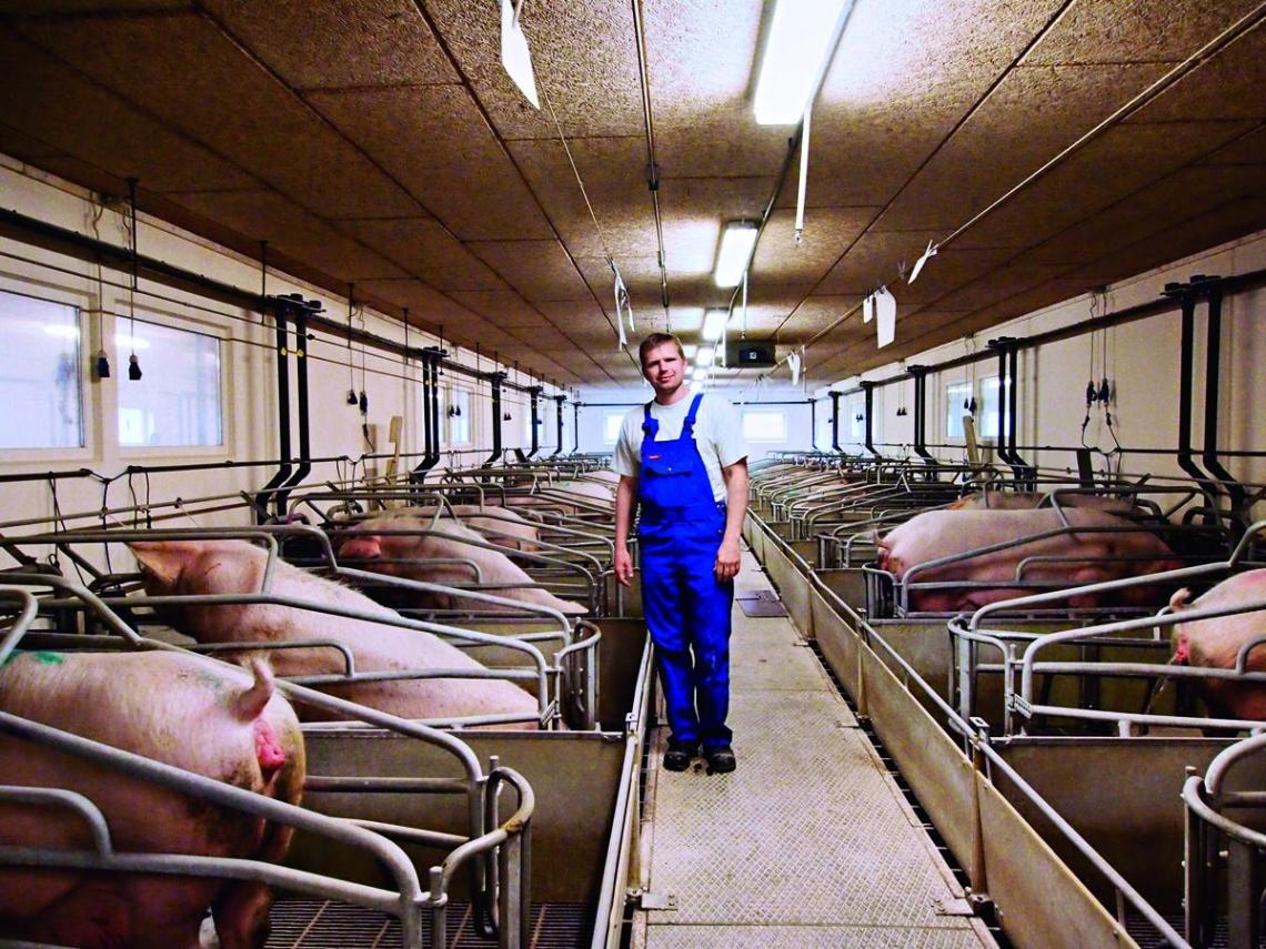 丹麥豬  締造北歐綠色奇蹟  台灣應該學習的五堂課