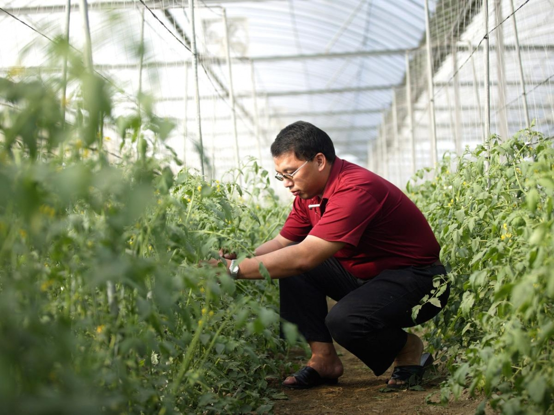 告別職場競爭  創意務農更富有