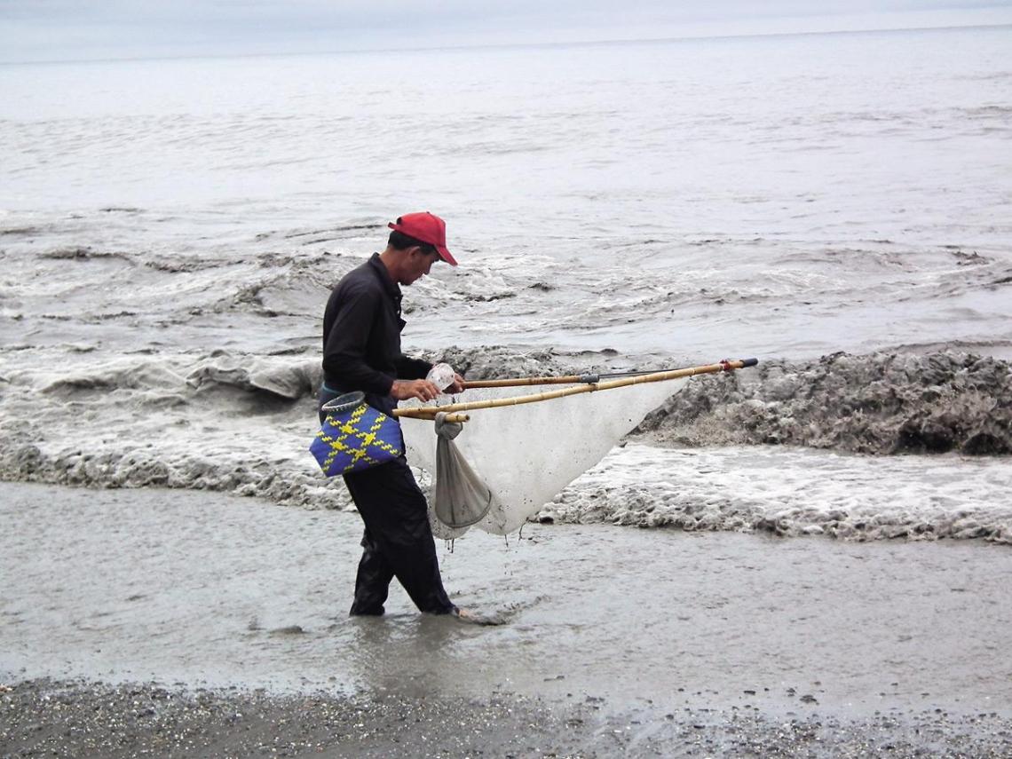 台灣鰻魚瀕臨滅絕的真相