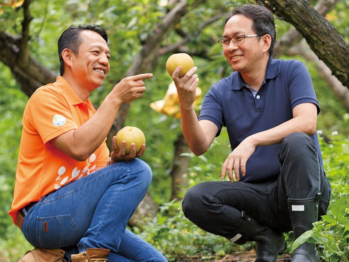 半山上的放養梨