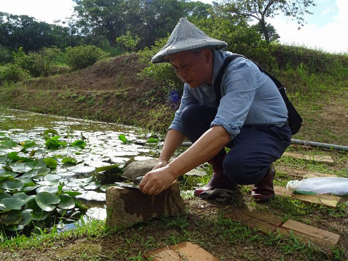 遇見貢寮雞母嶺,復育水梯田生態系