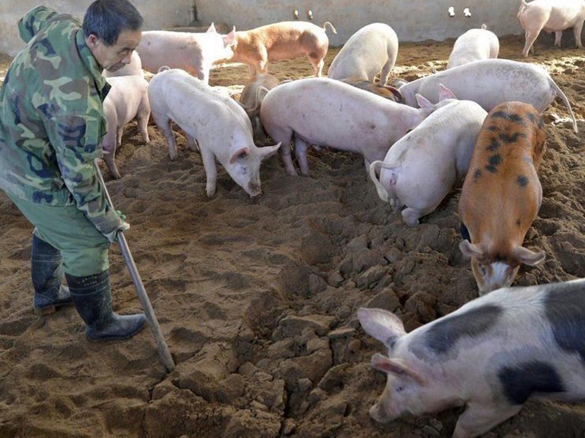 嘉義市政府環境保護局 非洲豬瘟防疫宣導