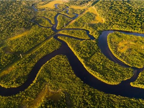 勇闖亞馬遜雨林!釣食人魚、看可愛水豚鼠,叢林冒險驚奇多!