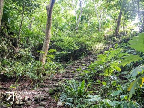 蘭嶼紅頭森林生態步道》走進原始熱帶樹林,壯闊美景好驚喜!