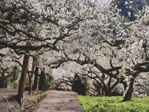 全台賞梅私房景點公開中,這些地方最漂亮!