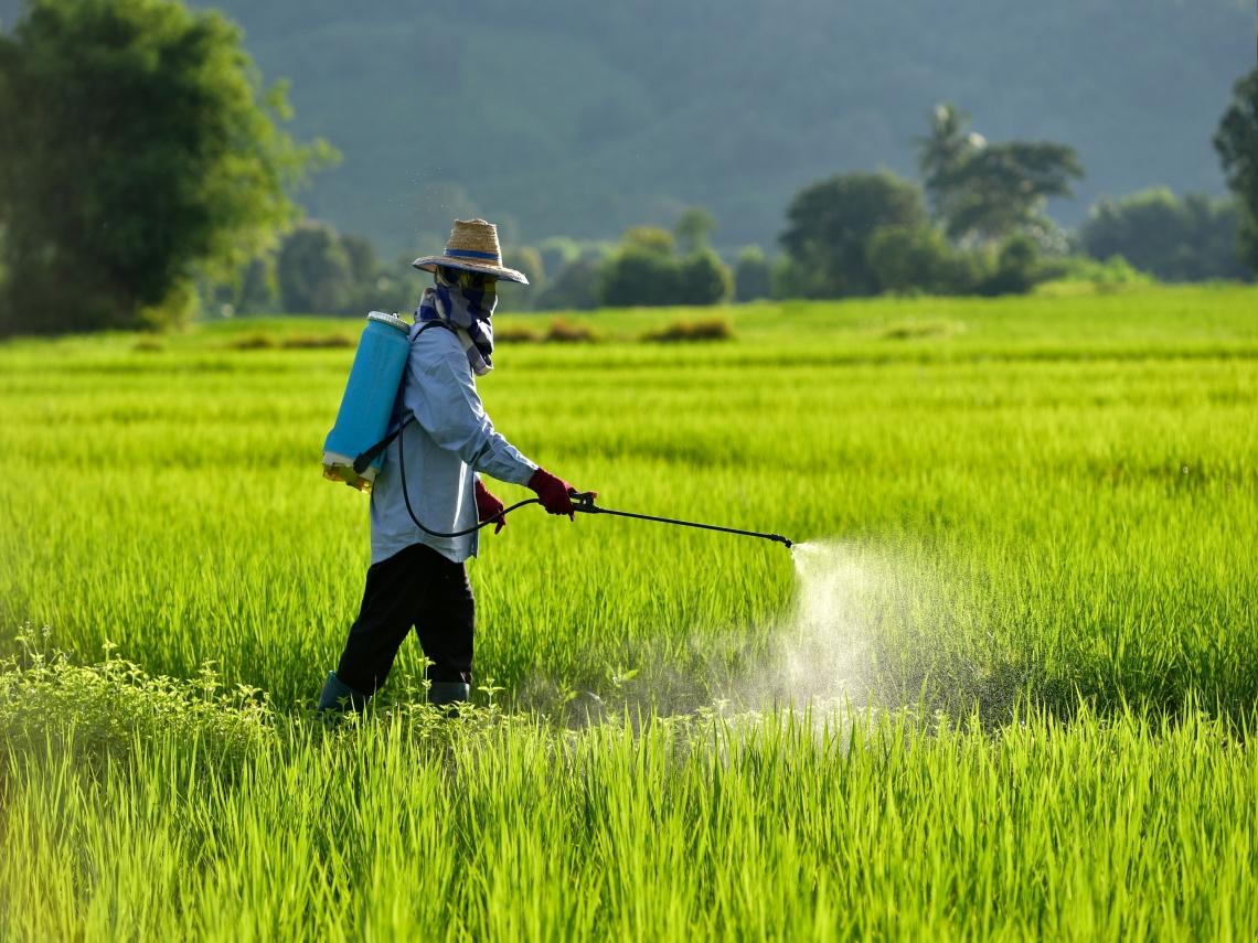 名人健康學》譚敦慈、宣明智吃蔬果不會吃進農藥 怎麼辦到的?