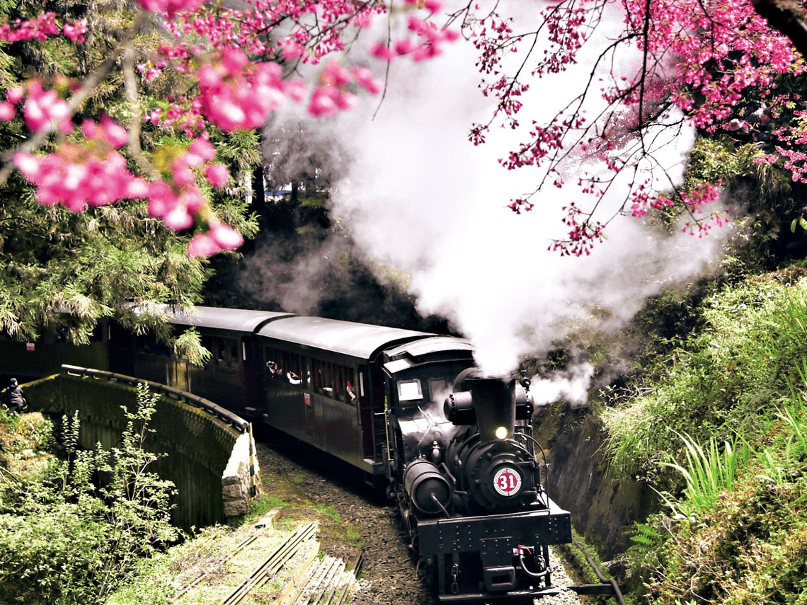 櫻花 盛放在山麓間的花見春語