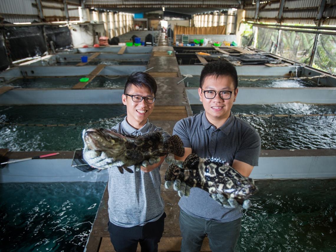 拚市場區隔  「魚社長」做網購、與私廚合作