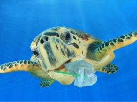 7月起禁用塑膠吸管》一隻海龜、一支YouTube短片,終止吸管百年禍害