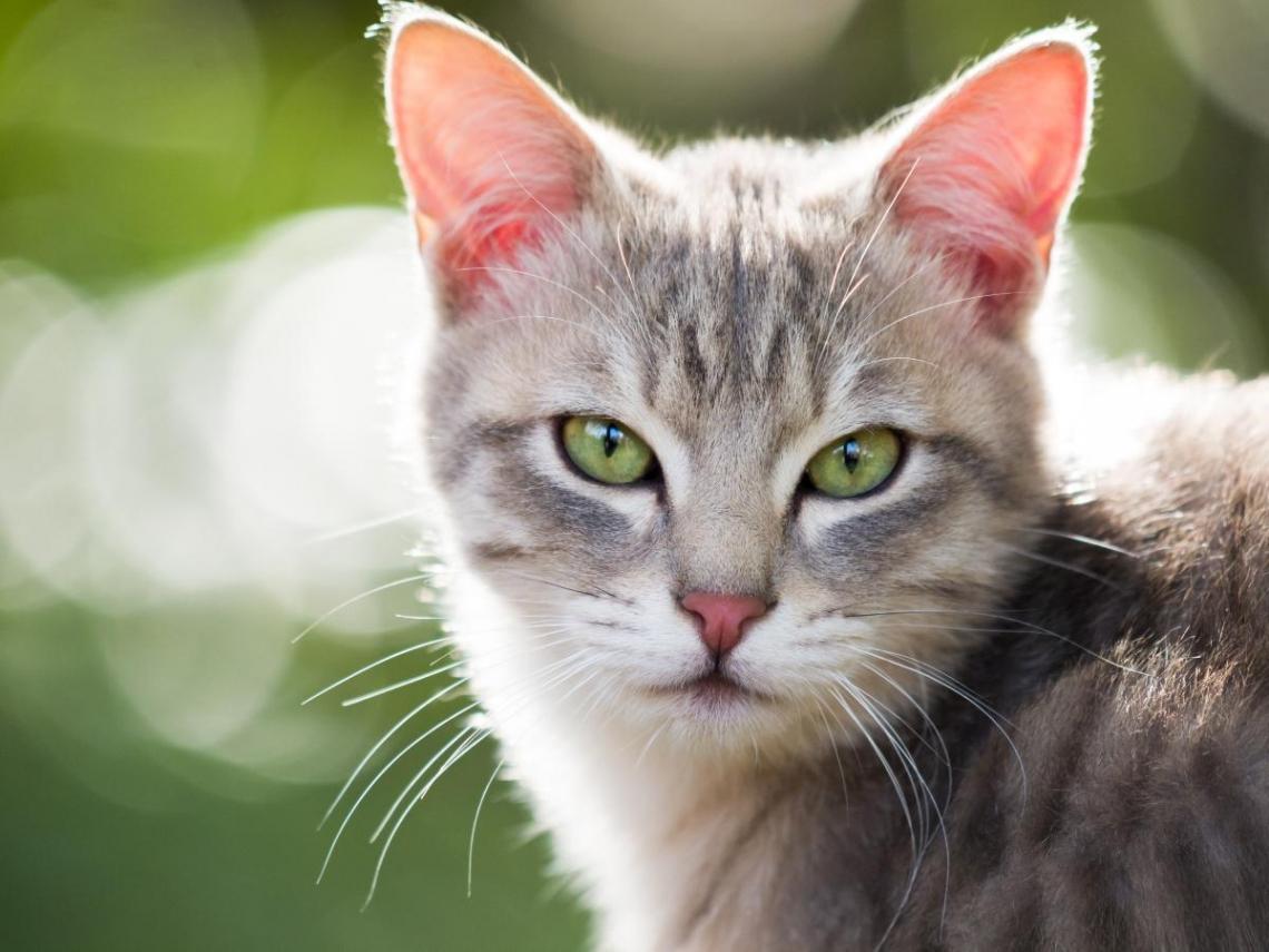 不要就是不要!你的人生必須有點像貓:別總是努力當他人眼中的自己