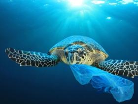 台灣13個最髒海岸曝光 塑膠瓶罐、發泡塑膠垃圾多