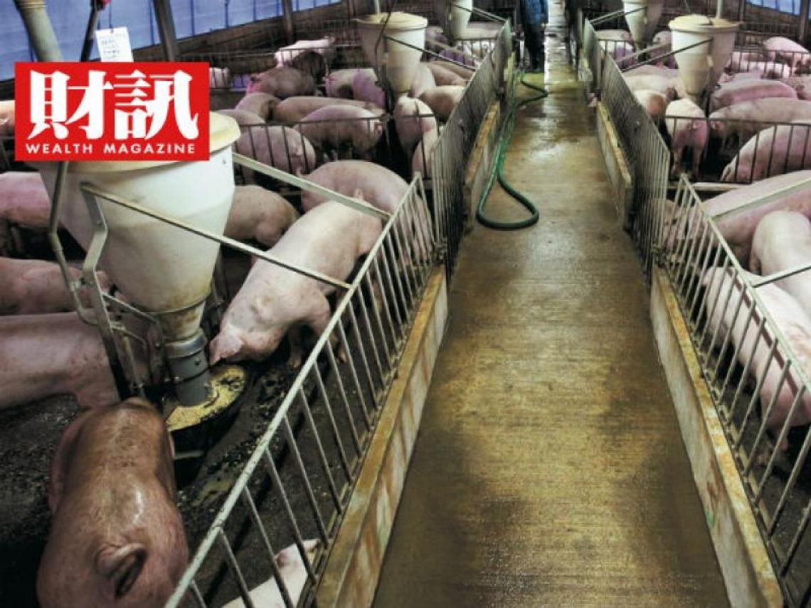 美國豬轉賣中國 台灣「豬」事大吉