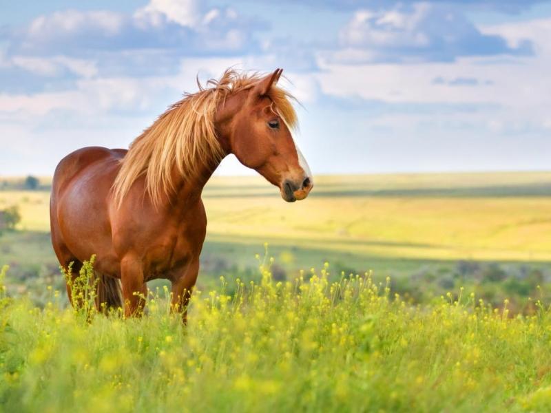 「草種好了,馬就來了」改變世界從扎穩基本功開始