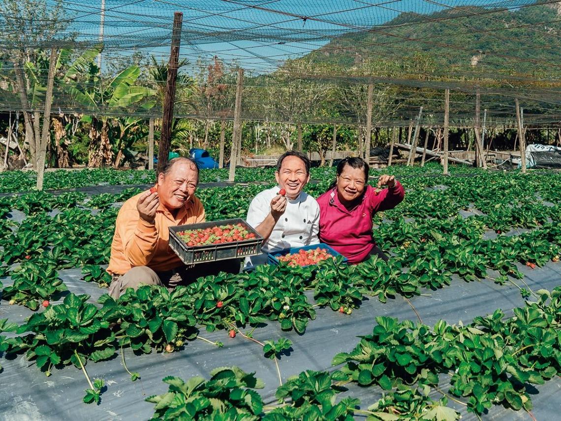 農藥與草莓