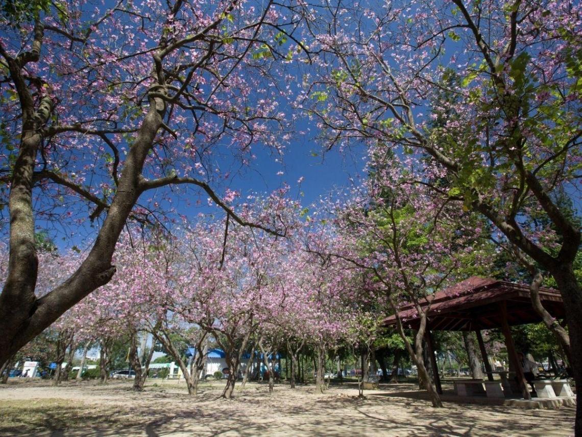 台南滿城花海超吸睛 當季賞花攻略報你知