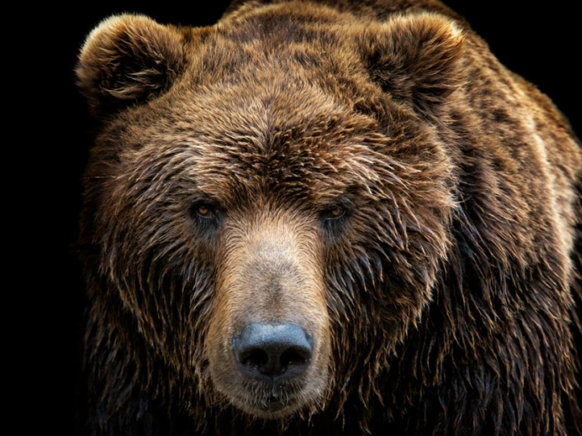 道瓊跌入熊市!世衛宣布武漢肺炎全球大流行 最長牛市宣告終結