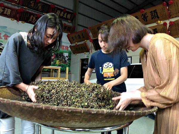 就在茶農家學習製茶