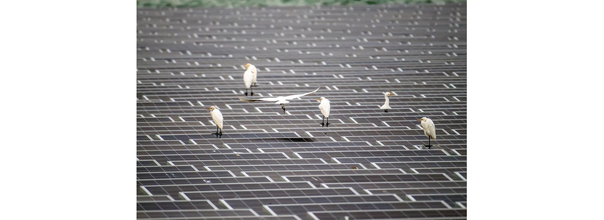 投資千億綠能電站建構幸福安全生活 辰亞能源首創海上型太陽能電站