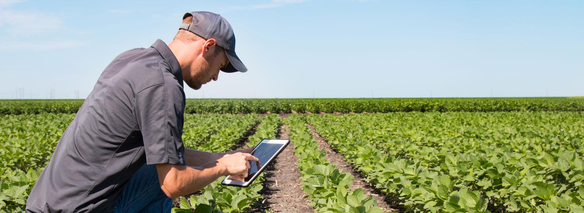 農業大革新 利用區塊鏈展現新價值