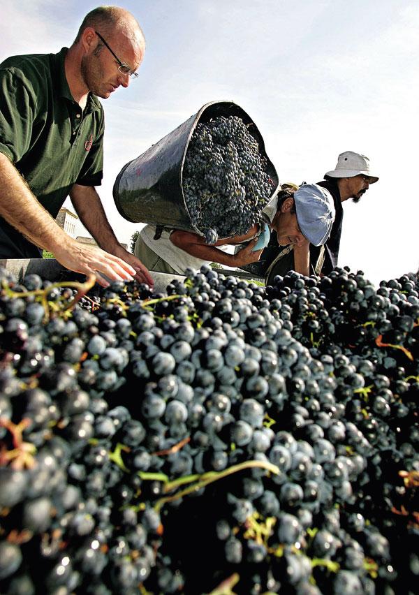 全球葡萄酒產業 價值數十億美 元,並且已成品 味的象徵。