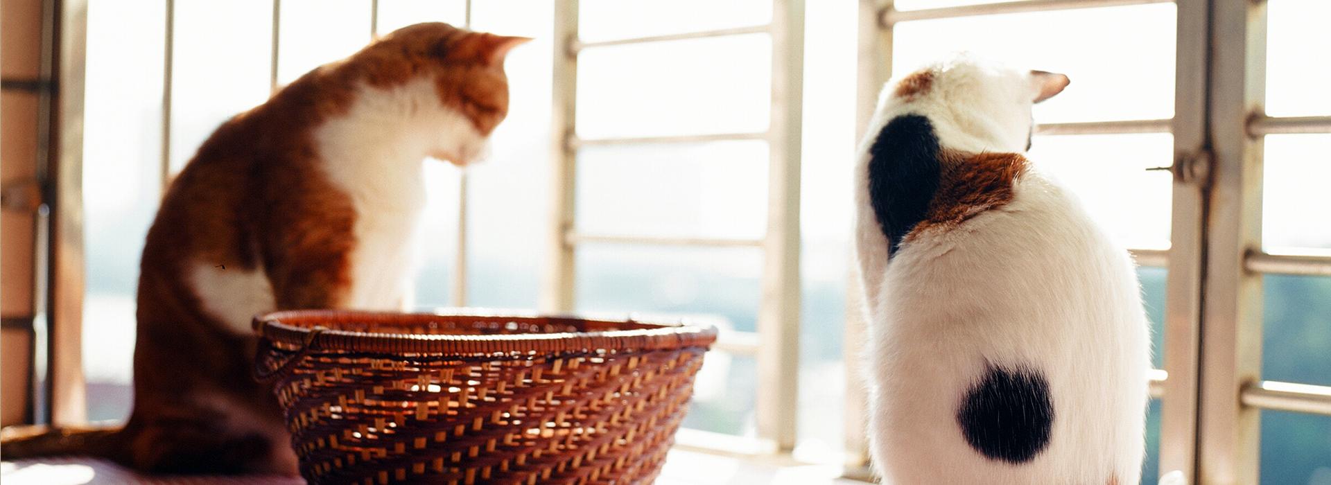 疊紙箱、曬太陽、多陪伴—7大撇步  搞定貓咪也能很輕鬆
