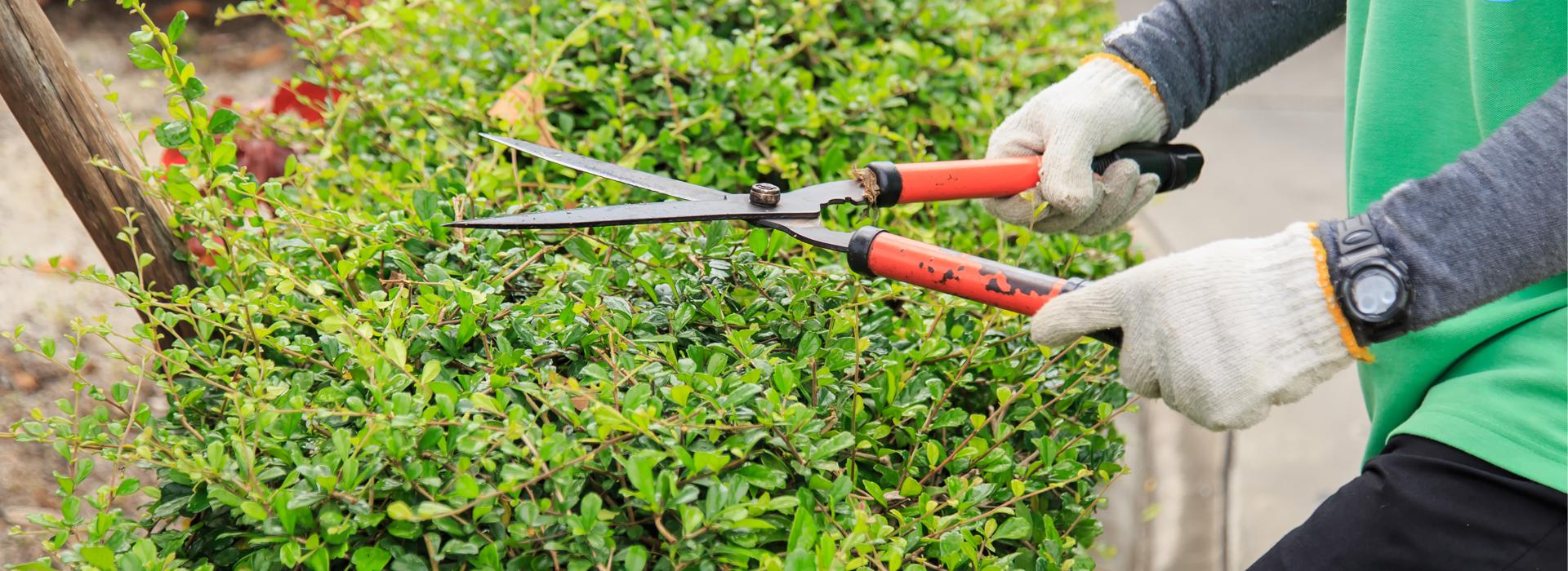 市場充滿不確定性,投資人應該像個園丁,而不是木匠