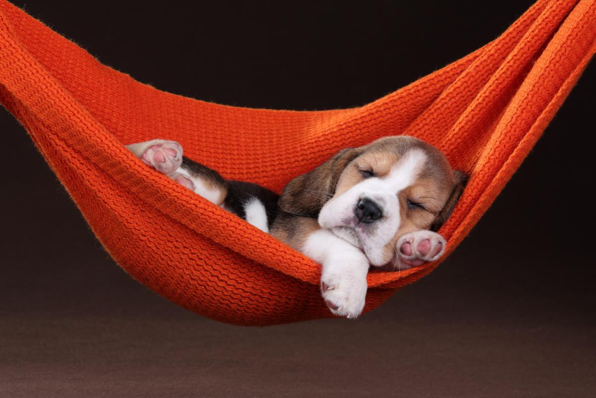 沒動力做任何事而感到焦慮時,想像在「吊床」上悠哉,就能自然而然充滿能量