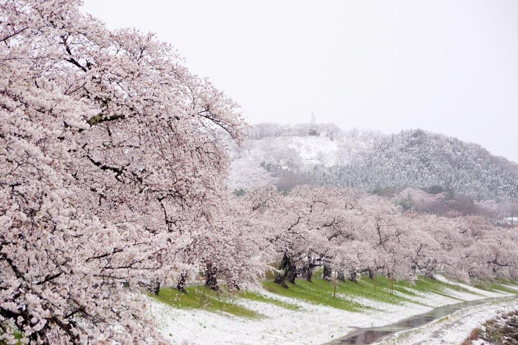 台東飆高溫吹焚風、日本關東降下4月雪 我們的地球怎麼了?
