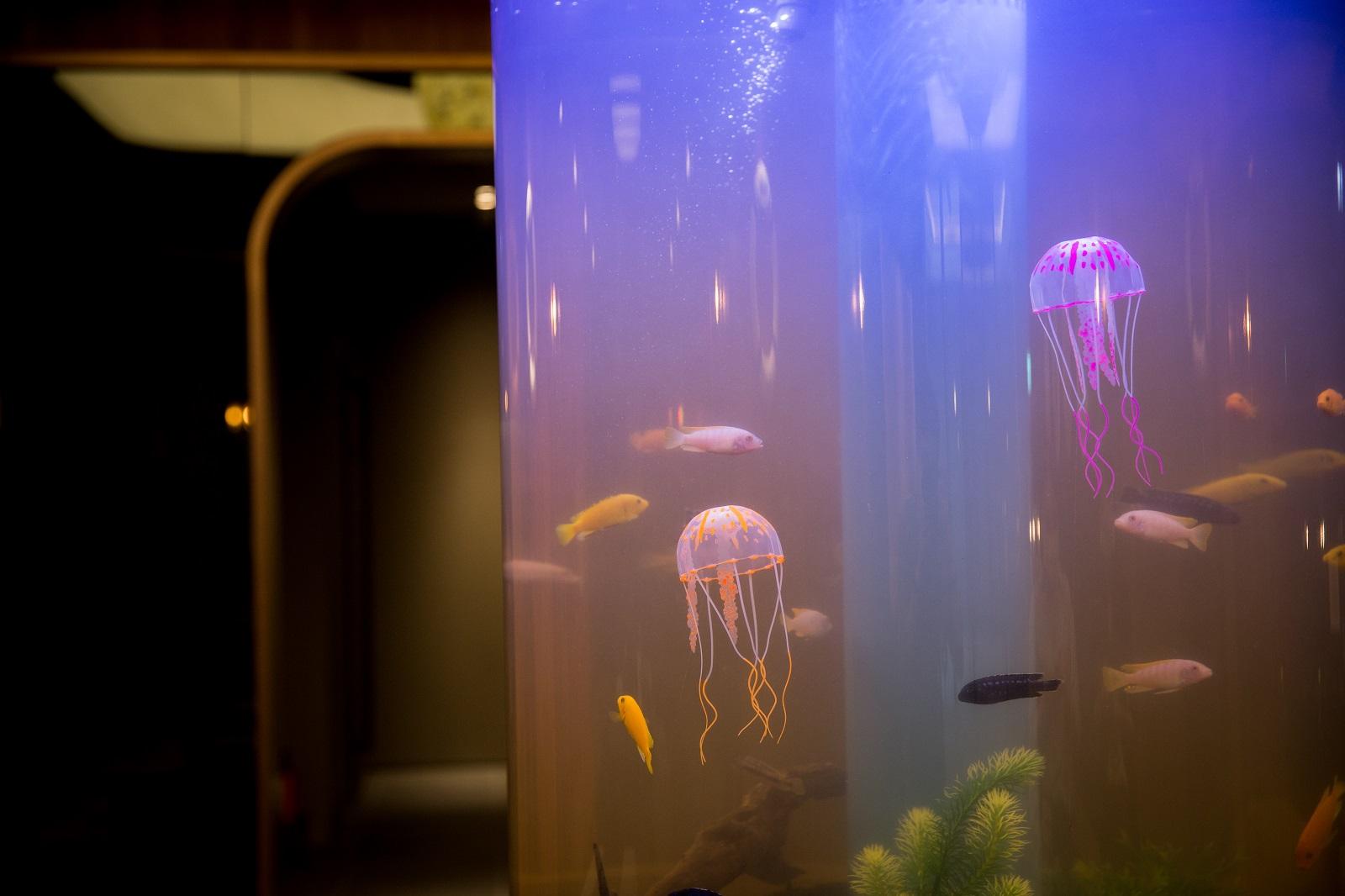 開箱!入住夢幻「海洋飯店」、夜宿Xpark水族館 4大亮點一次看