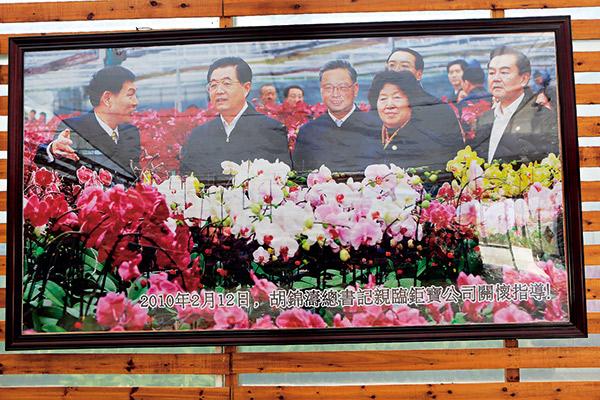 中國蘭花扶植