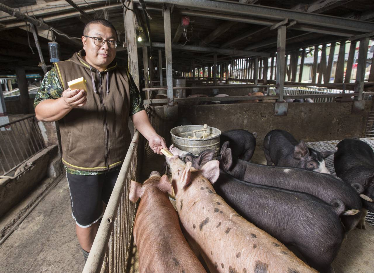 萊豬進口沒在怕》在A CUT點一份要800元 這款台灣豬肉有何魅力,竟讓米其林餐廳搶著要?
