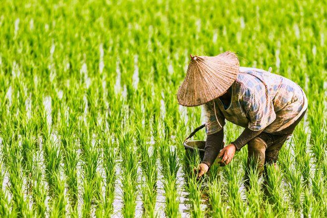「農地重劃」能解決有限農耕地、舒解農民苦難嗎?