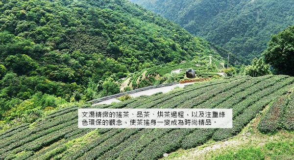 文湯公司 站穩國際綠色茶產業精品地位