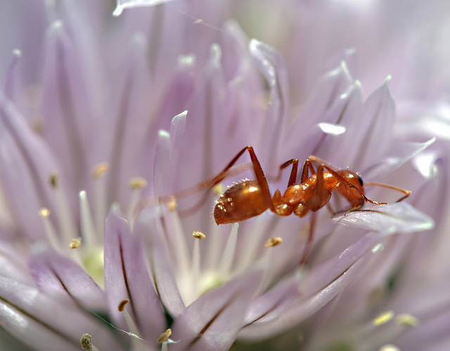 跟螞蟻學習應變力