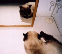 不要當一隻模仿的貓
