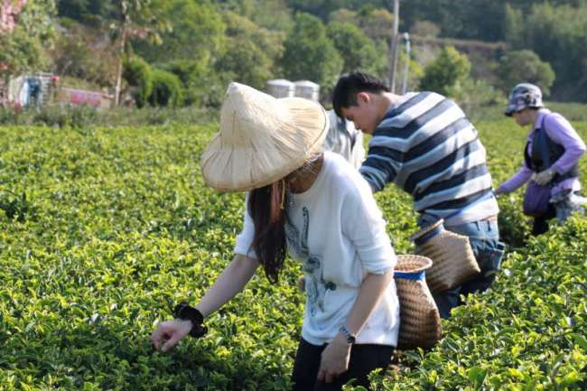 台灣人都要說得一口好茶