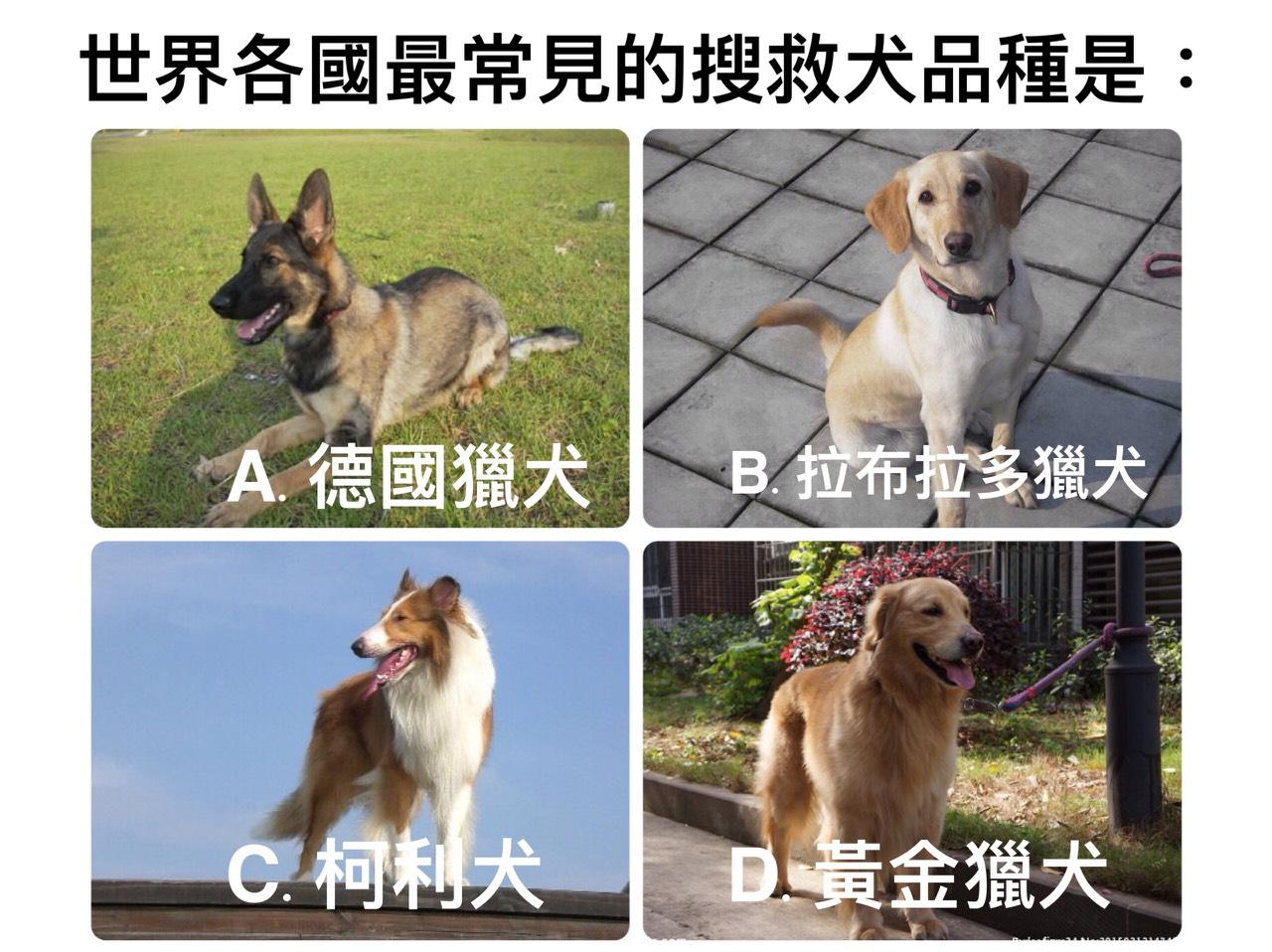 地震小測驗,請問,世界各國最常見的搜救犬品種是?