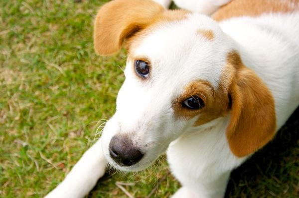 「單純的付出就是一種療癒」 治療犬讓病人重拾笑顏