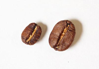 家雪非豆與阿里山咖啡豆