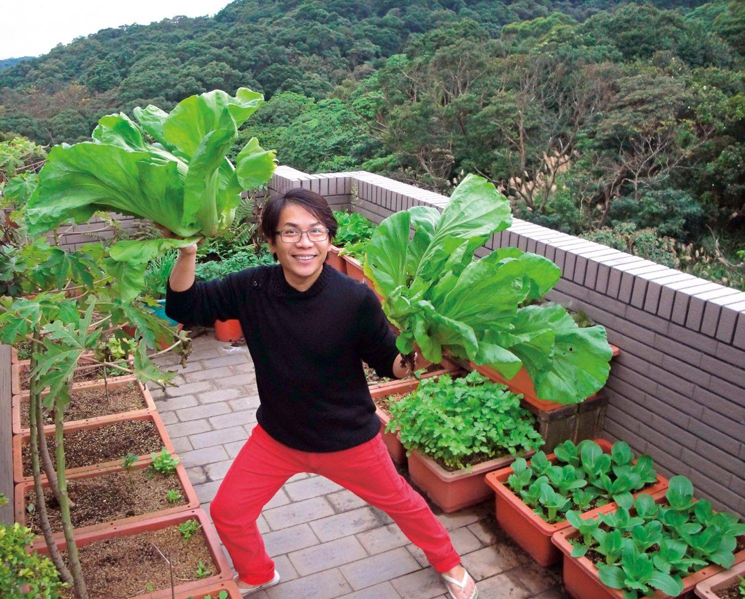 許傑輝在自家陽台種無農藥蔬菜