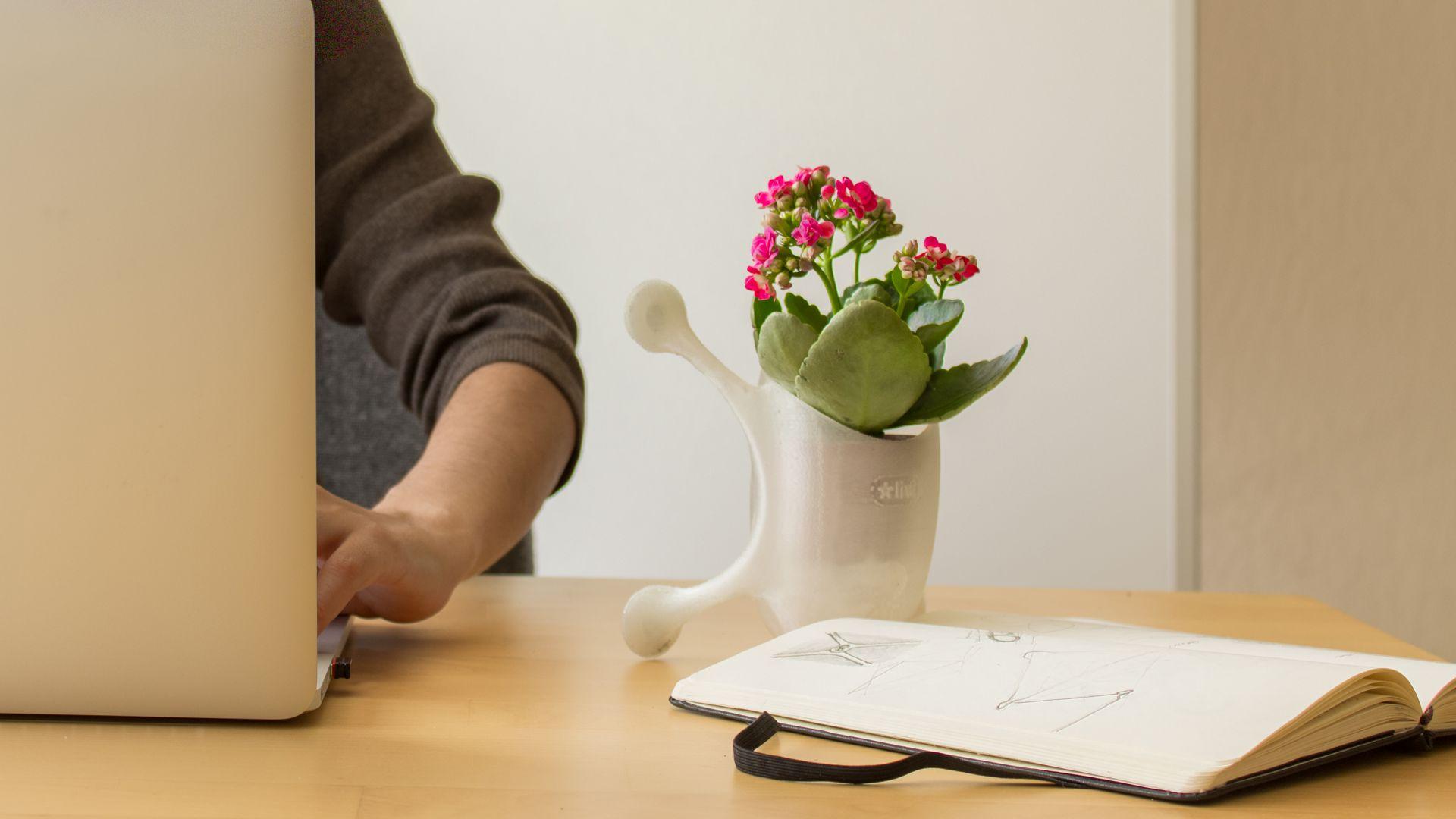 不必花大錢 這些植物就能淨化室內空氣