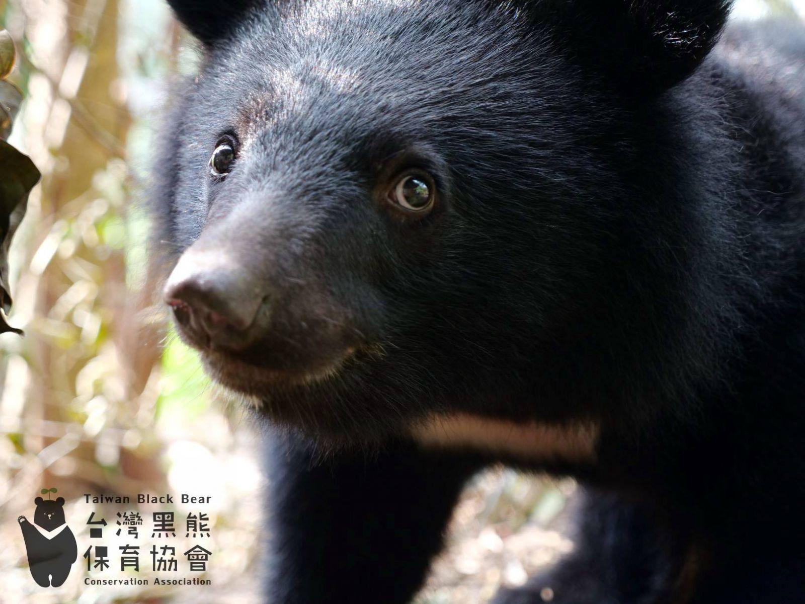 與惡的距離並不遙遠...南安黑熊事件給台灣人上了一堂課